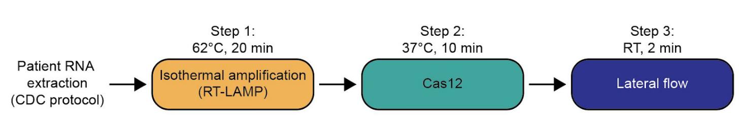 DETECTR Method for Covid-19 rapid test