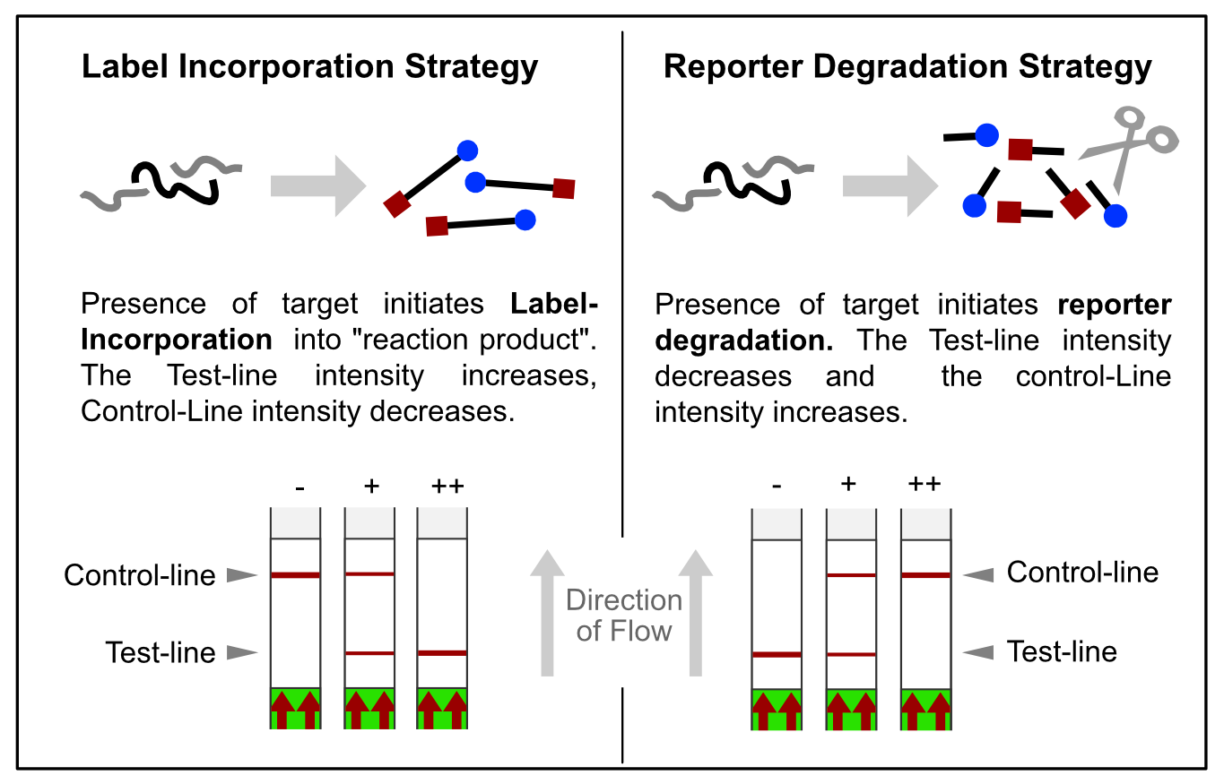Overview of two LFA-related signal generation strategies.