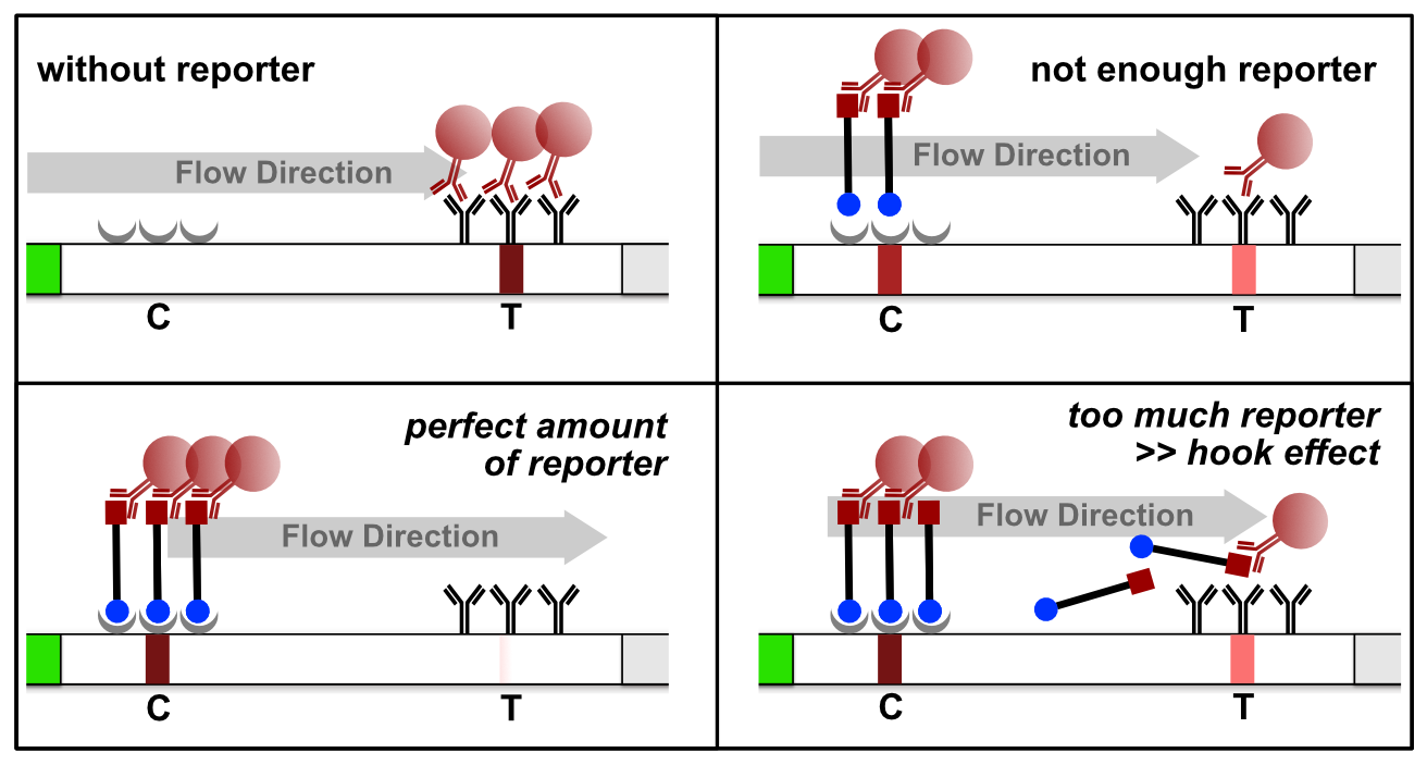 Figure 6. Reporter induced Hook Effect in the HybriDetect system.