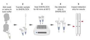 Workflow SHERLOCK for SARS-CoV-2 Detection
