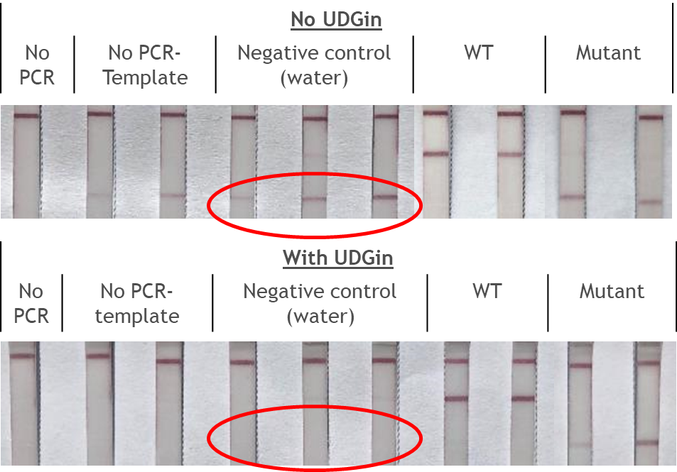 Fig. 1: Contamination in Lateral Flow Assay.