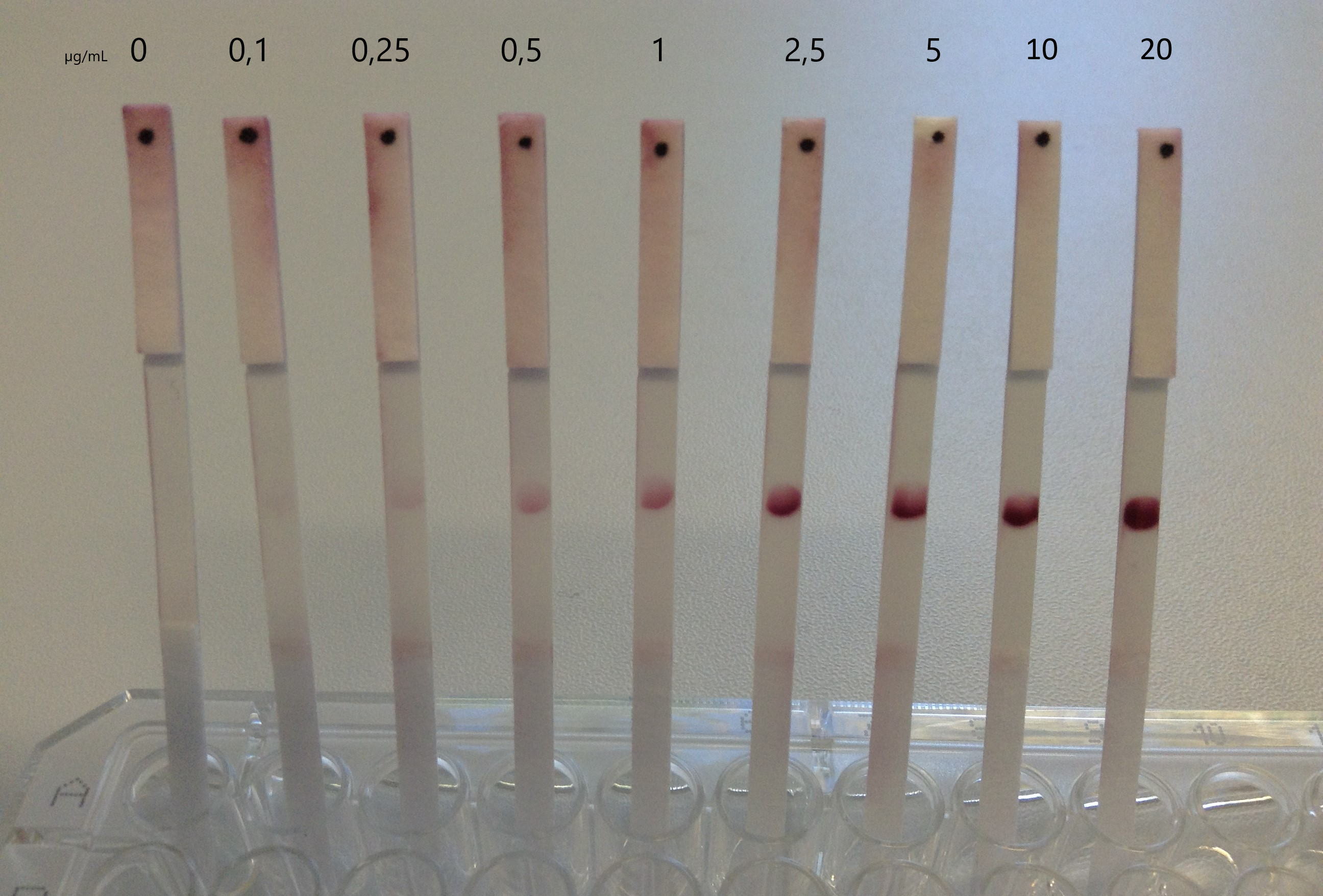 Detection of a HA-Tag specific antibody at several antibody concentrations