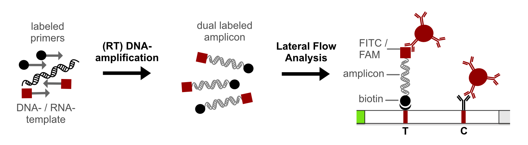 DNA-Amplification Lateral Flow Strategy