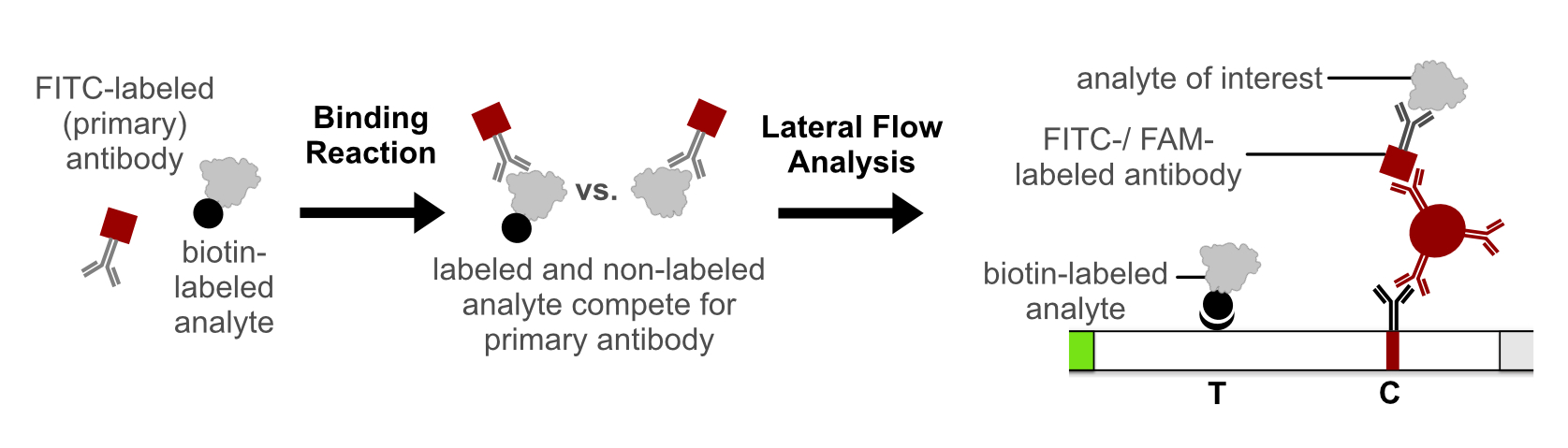 Competetive Lateral Flow Immunoassay