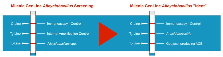 Result Interpretation of the Milenia GenLine Alicyclobacillus Test System