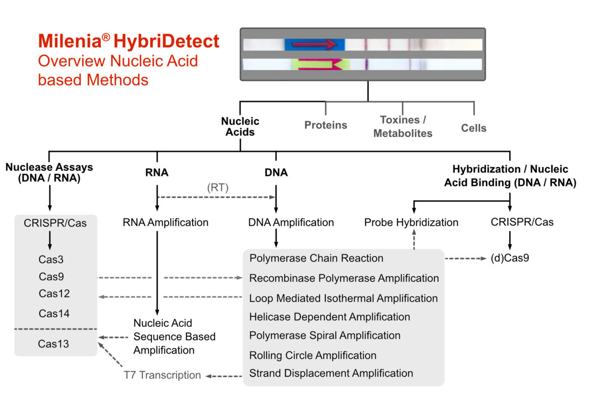 Overview most frequently used DNA-/ RNA dependent detection startegies combined with Milenia HybriDetect
