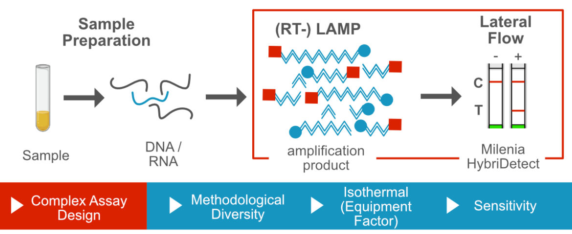 loop mediated isothermal amplification and lateral flow