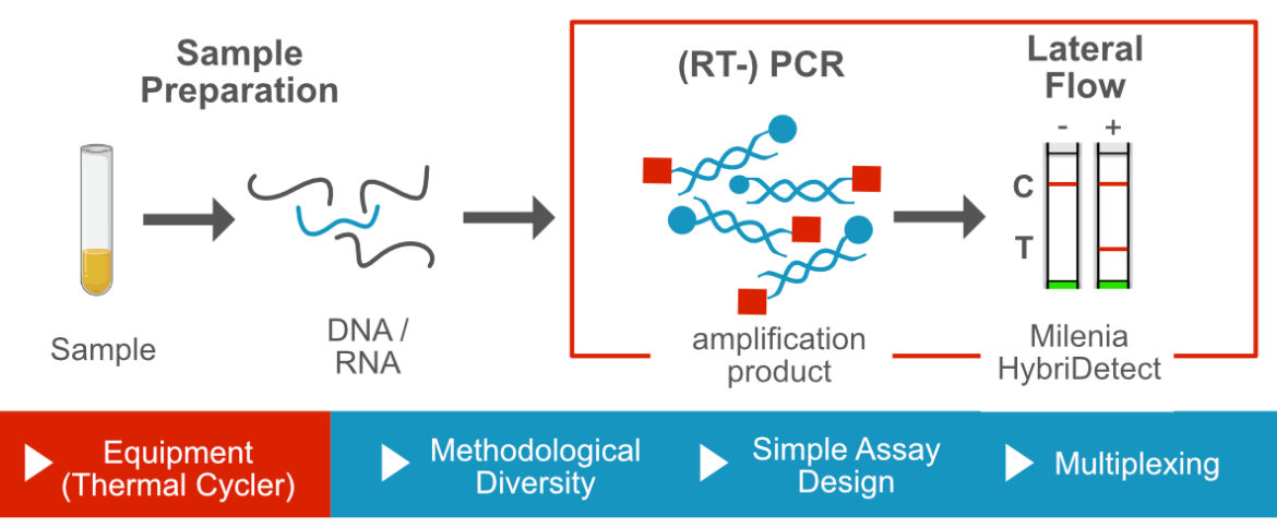 Polymerase Chain Reaction-based DNA-Amplification and Lateral Flow