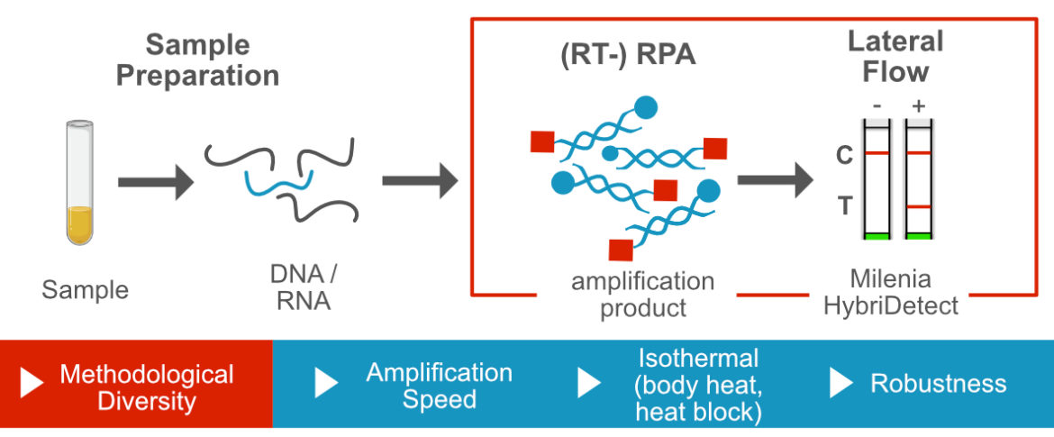 Recombinase Polymerase Amplification and Lateral Flow