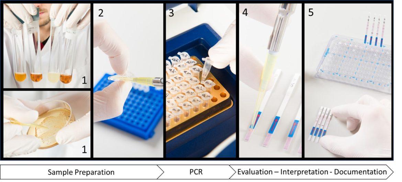 Worfkflow-Milenia-GenLine-Detection-Beer-Spoiling-Bacteria